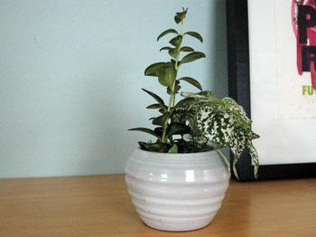 Whiteplanter